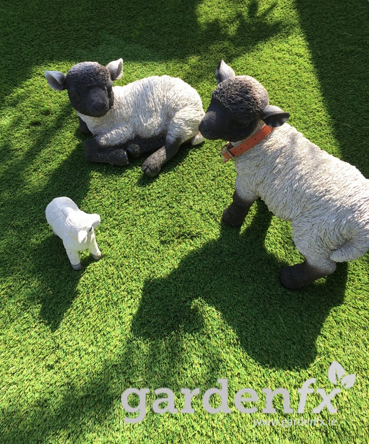 Lambs on Artificial Grass